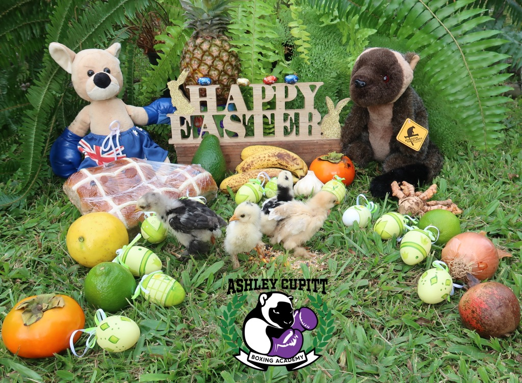 Happy Easter!! May you be as adventurous as these chickens. :-)  We have a Kangaroo on the left and a Tree Kangaroo on the right, a mix of random fruit and veg, hot cross buns, ferns and chickens.  Photo by Louise anderson-Clemence, with help from Ashley Cupitt. Chicks of course wanted to run around!